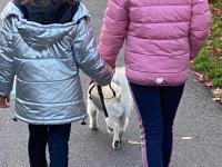 2020-11-09_Hundestaffel (1)
